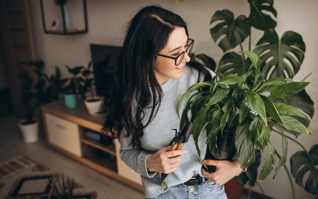 plantes vertes belle forme santé