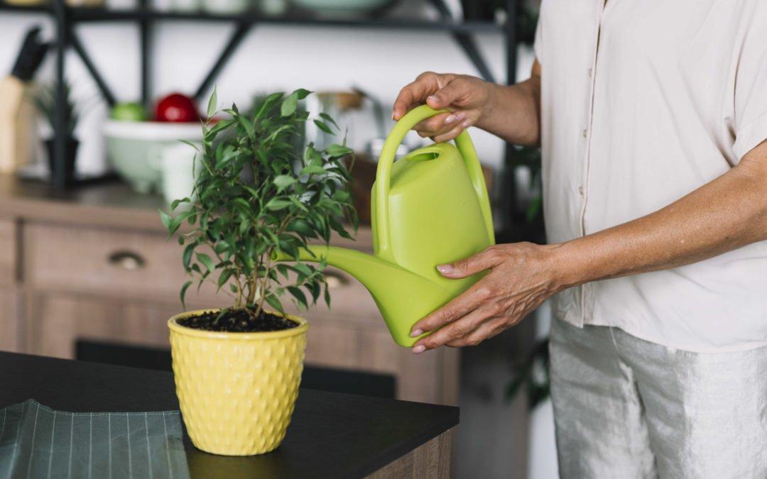 Quand et comment arroser vos plantes vertes par n'bioo
