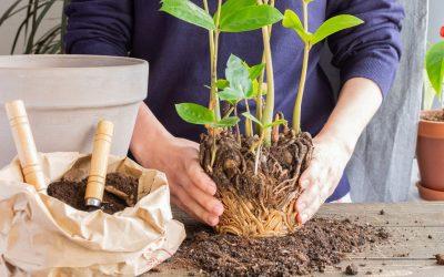Comment mettre une plante en pot ?