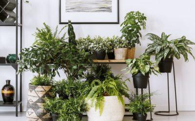 LES 10 PLUS BELLES PLANTES D'INTERIEUR