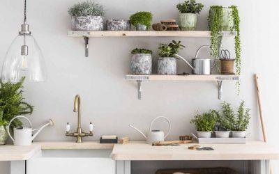 Quelle plante intérieur dans une cuisine