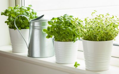 Top 7 des plantes aromatiques a faire pousser en intérieur