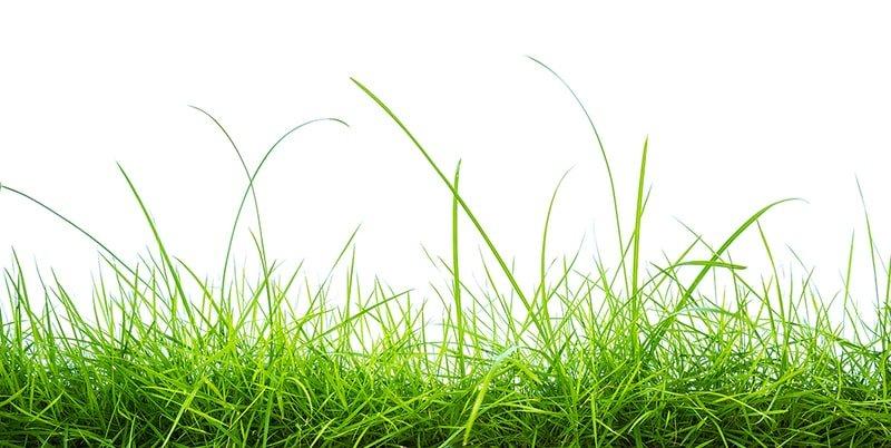 engrais organique naturel