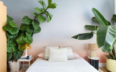 Quelles plantes dans une chambre ?