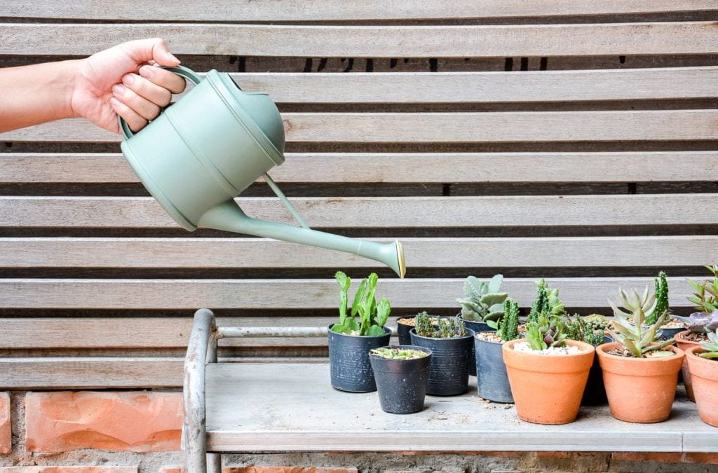 comment arroser vos succulentes