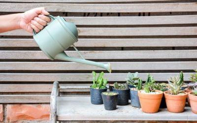 Comment bien arroser vos plantes grasses ?