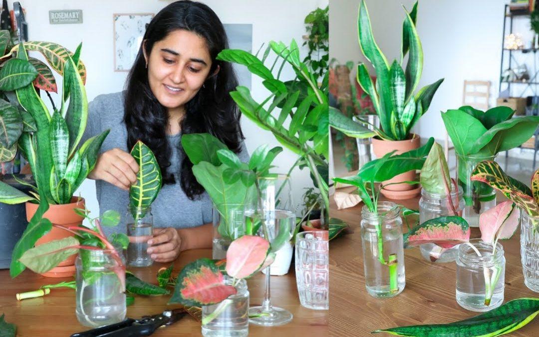 comment bouturer plantes vertes
