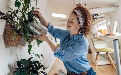 Comment fertiliser une plante d'intérieur ?