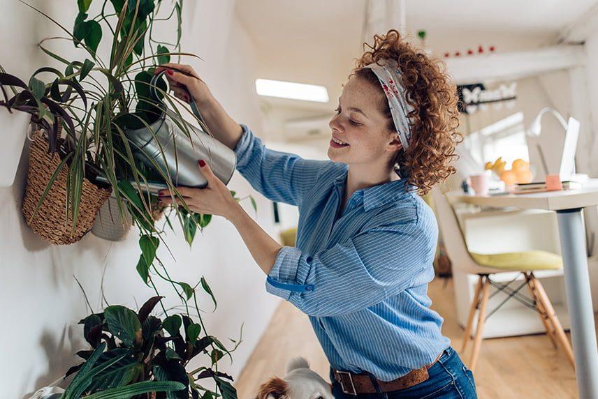 comment fertiliser plante d'intérieur