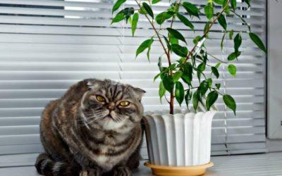Comment empêcher un chat de faire pipi dans les plantes