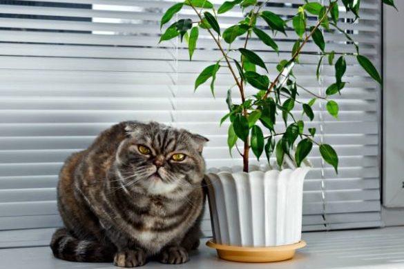 empêcher votre chat de faire pipi dans vos plantes