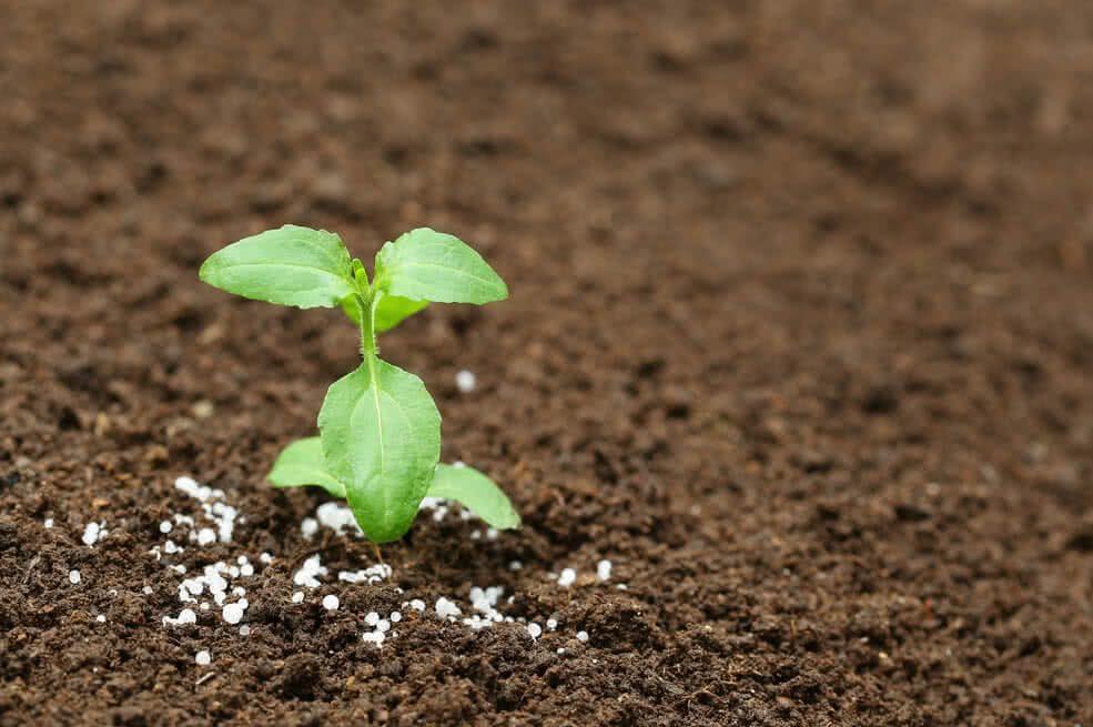 engrais chimique plantes vertes