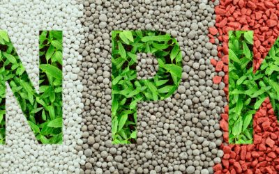 Que signifie NPK ? Tout savoir sur la fertilisation naturelle
