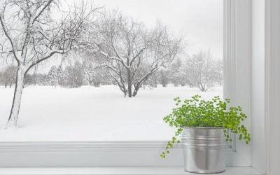 PLANTES D'INTERIEUR : FAUT-IL METTRE DE L'ENGRAIS EN HIVERS ?