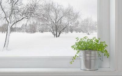 Plantes d'intérieur : Faut-il mettre de l'engrais en hivers ?