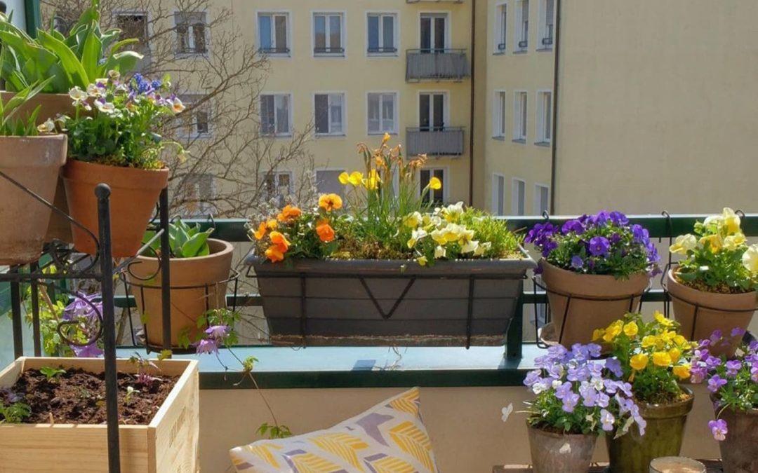 terrasse plantes en pot