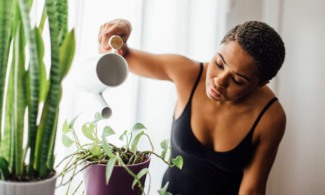 De quoi se nourrissent les plantes vertes ?