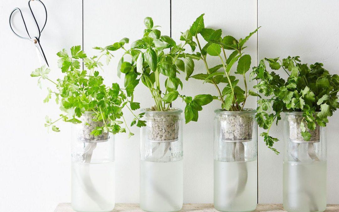 Jardin aromatique d'appartement : 10 conseils pour débuter