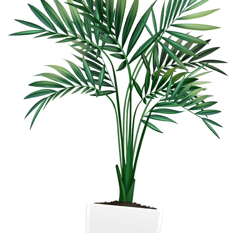 plante verte soins