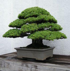 Bonsai symbolisme