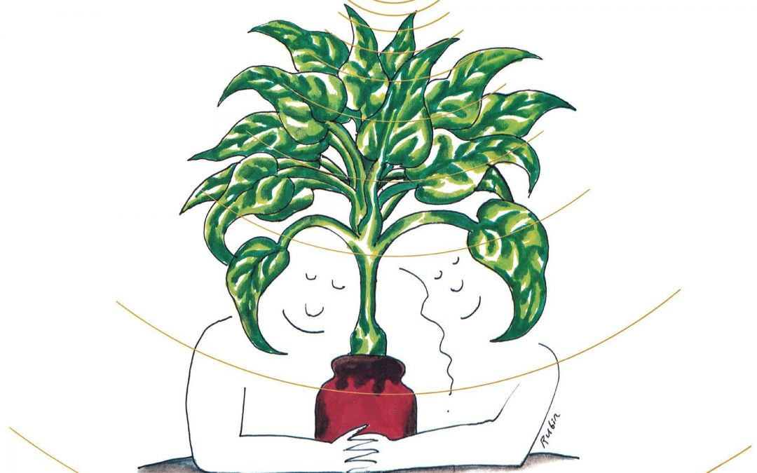 symbolisme des plantes