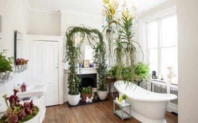 Les meilleures plantes pour votre salle de bains