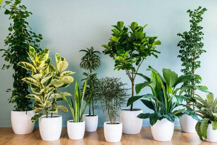 Quelle alimentation pour mes plantes vertes?