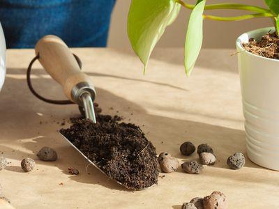 De quoi ont besoin vos plantes vertes